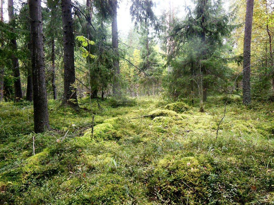 фото ЗакС политика Для сохранения лесов Карелии понадобится 64 млн рублей