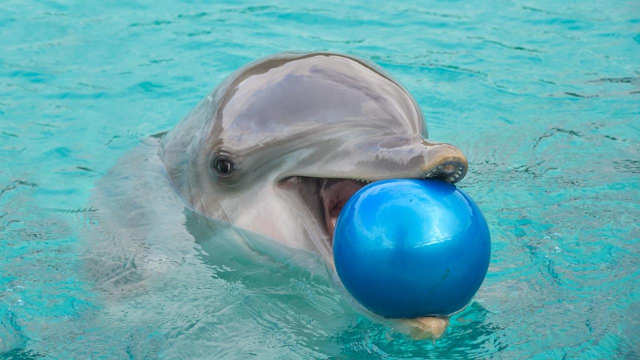 фото ЗакС политика Дельфинарий на Крестовском острове закроется в конце октября