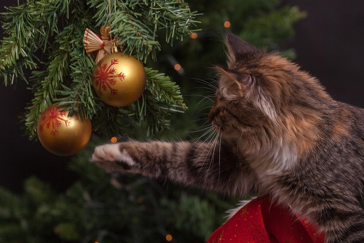 Роспотребнадзор сомневается в возможности массовых новогодних гуляний в Петербурге