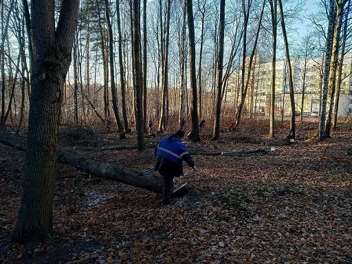 фото ЗакС политика Активисты недовольны санитарной рубкой деревьев в Сестрорецке