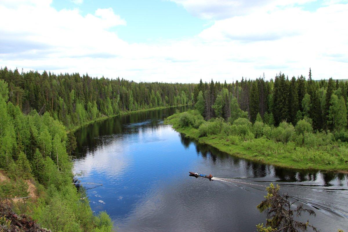 фото ЗакС политика Фонд дикой природы WWF протестует против вырубки заказника в Архангельской области