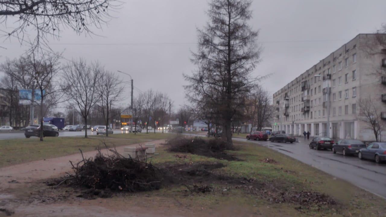 фото ЗакС политика Жители Московского района неприятно удивлены уничтожением более тысячи кустарников