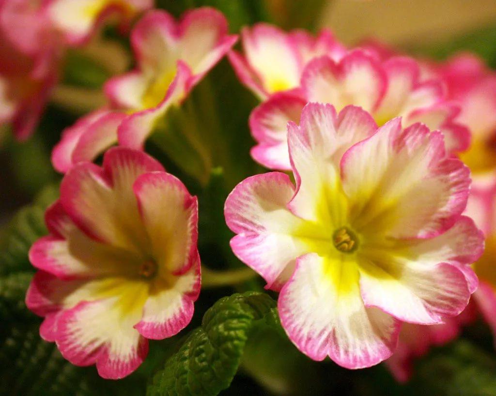 фото ЗакС политика В 2020 году Петербург украсят тремя миллионами цветов