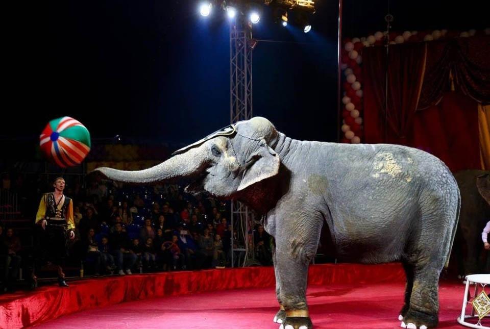 фото ЗакС политика Жители Карелии требуют запретить передвижным циркам посещать их республику