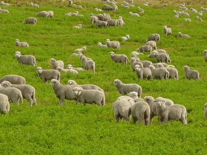 фото ЗакС политика Белоруссия ввела ограничения на ввоз скота из Псковской области