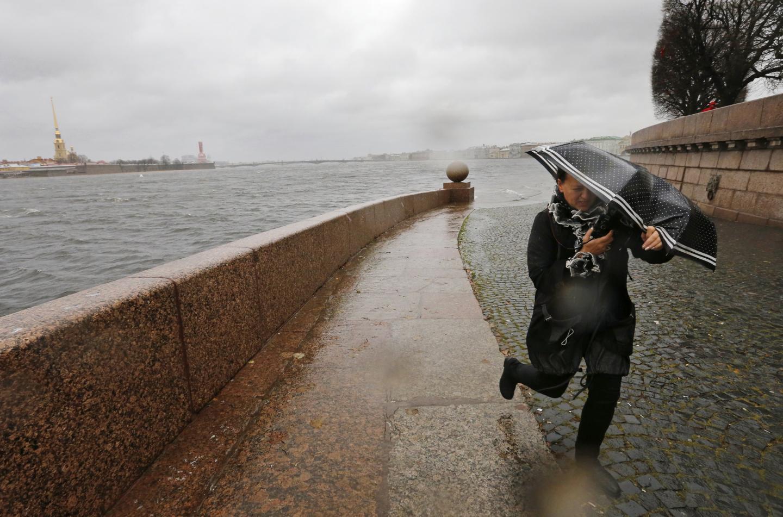фото ЗакС политика В Петербурге сильный ветер повалил не менее тридцати деревьев