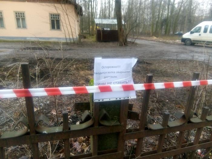 фото ЗакС политика Активисты жалуются на вырубку деревьев у Серебряного пруда