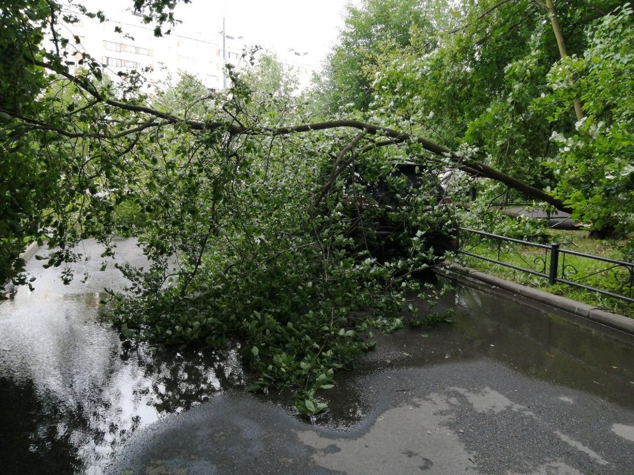 фото ЗакС политика Из-за урагана в Петербурге пострадали четыре человека