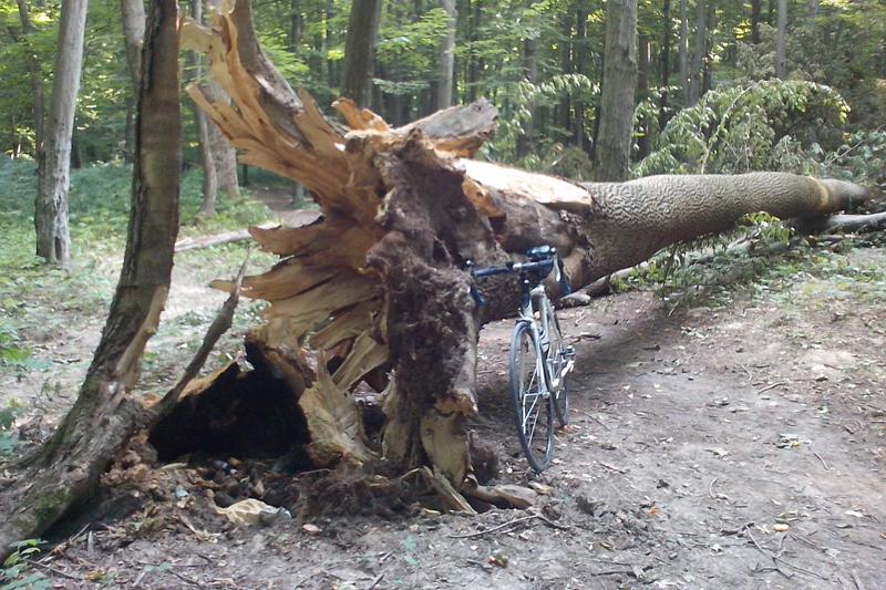 фото ЗакС политика В Смольном посчитали количество деревьев, поваленных ветром за сутки
