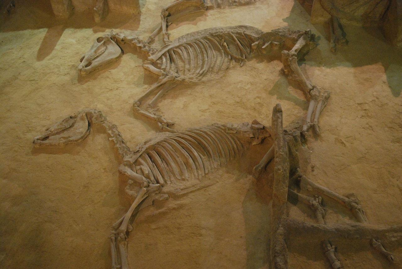 Под Новгородом нашли следы поселений, существовавших более тысячи лет назад