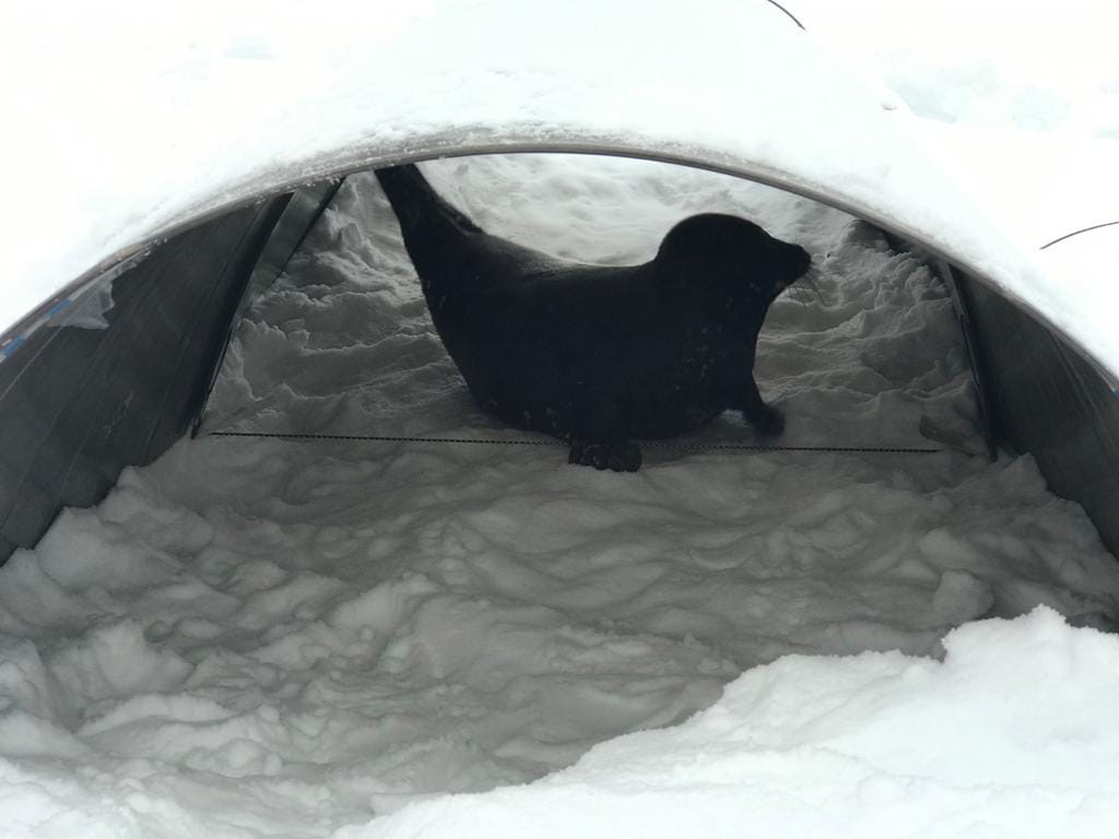 фото ЗакС политика Зоозащитники хотят установить домики для тюленей на Ладоге и Финском заливе