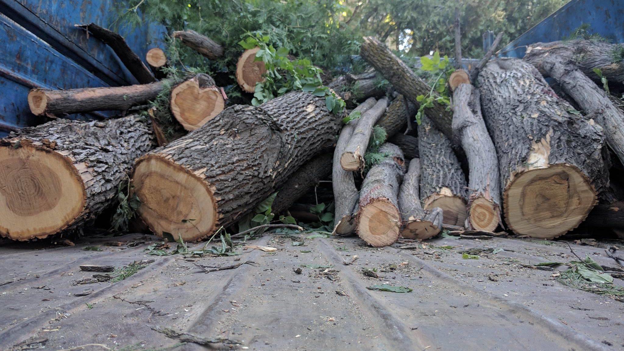 фото ЗакС политика Жители Большеохтинского, 1, защищают деревья от муниципалов