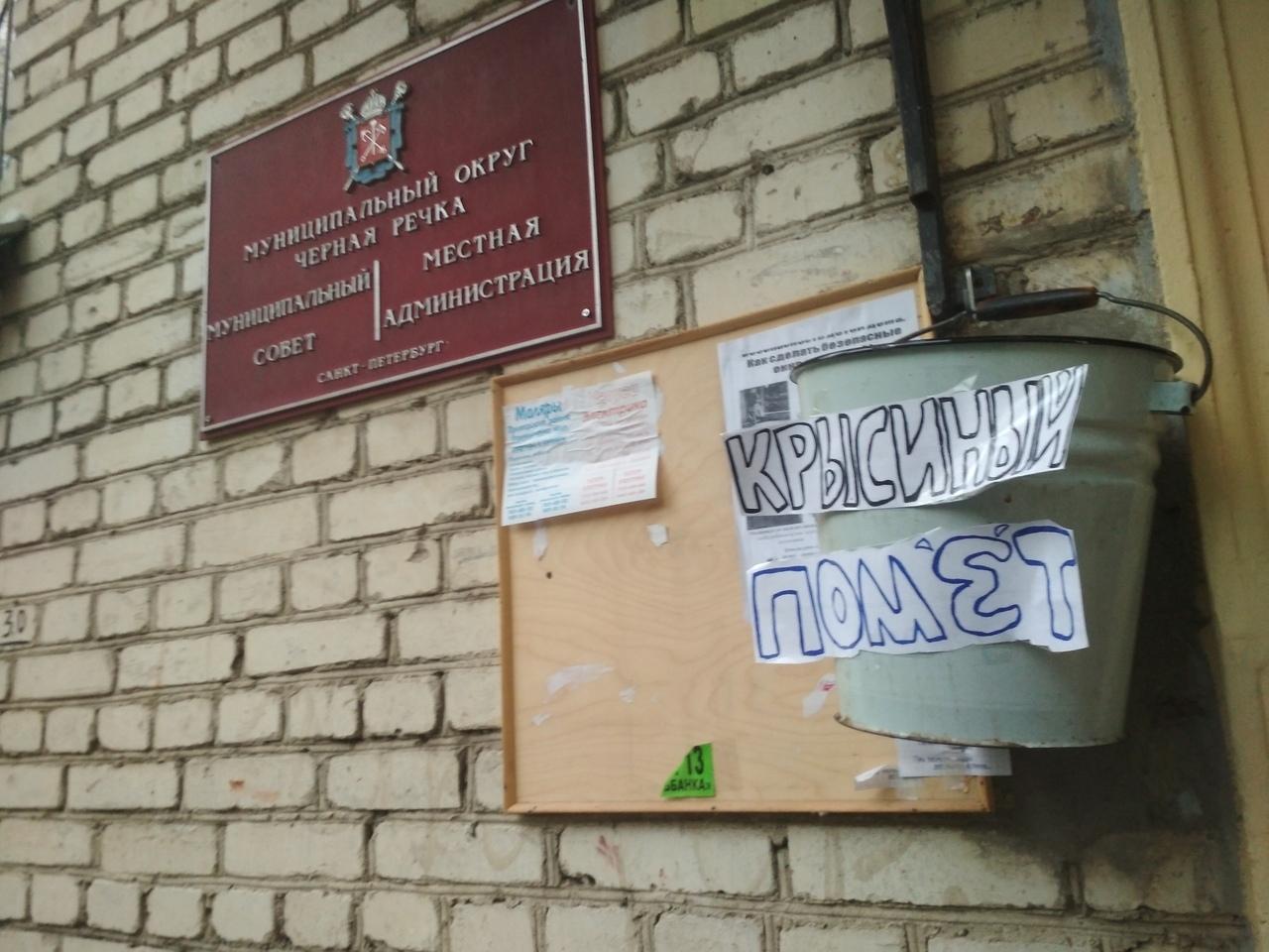 фото ЗакС политика У входа в администрацию МО Черная речка повесили ведро с «крысиным пометом»