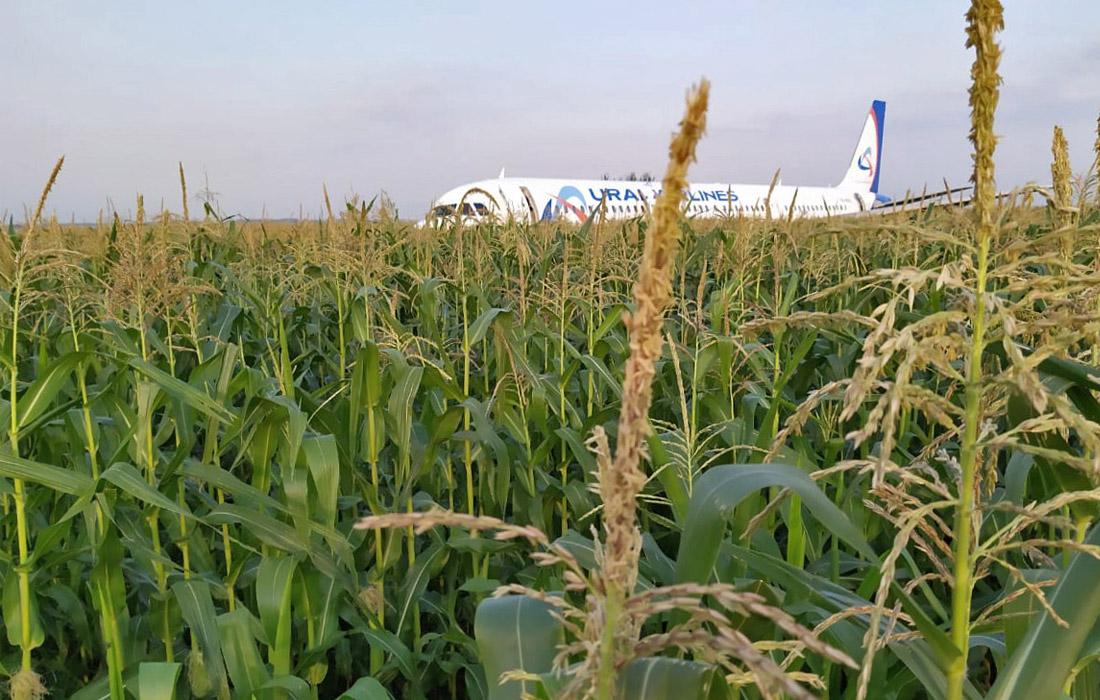 фото ЗакС политика Экипажу севшего в кукурузном поле лайнера A321 подарили новые квартиры