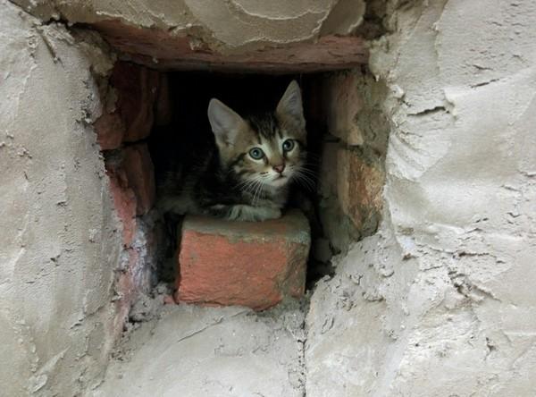 На содержание приютов для бродячих животных выделят 5 млн рублей