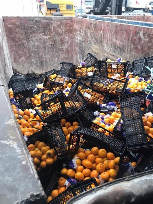 """фото ЗакС политика """"Фортуна"""" обошла стороной мандарины из США: Россельхознадзор уничтожил 21 тонну фруктов"""