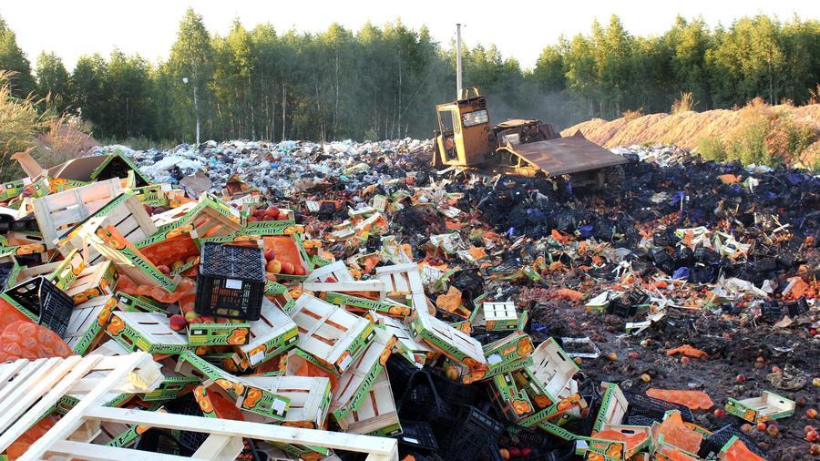 """фото ЗакС политика Под Псковом уничтожили 4 тонны яблок """"неизвестного происхождения"""""""