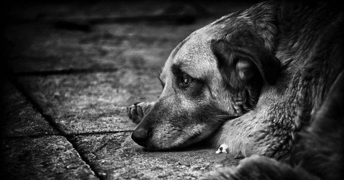 """фото ЗакС политика """"Зеленый фронт"""" обнаружил большую свалку и безнадзорных собак на Волхонском шоссе"""
