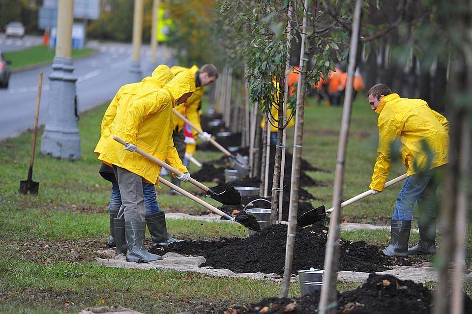 фото ЗакС политика Петербургские садовники начали высаживать кусты сирени, роз и шиповника