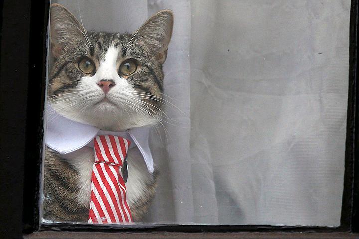 фото ЗакС политика В Wikileaks подтвердили, что кот Ассанжа в безопасности после задержания хозяина