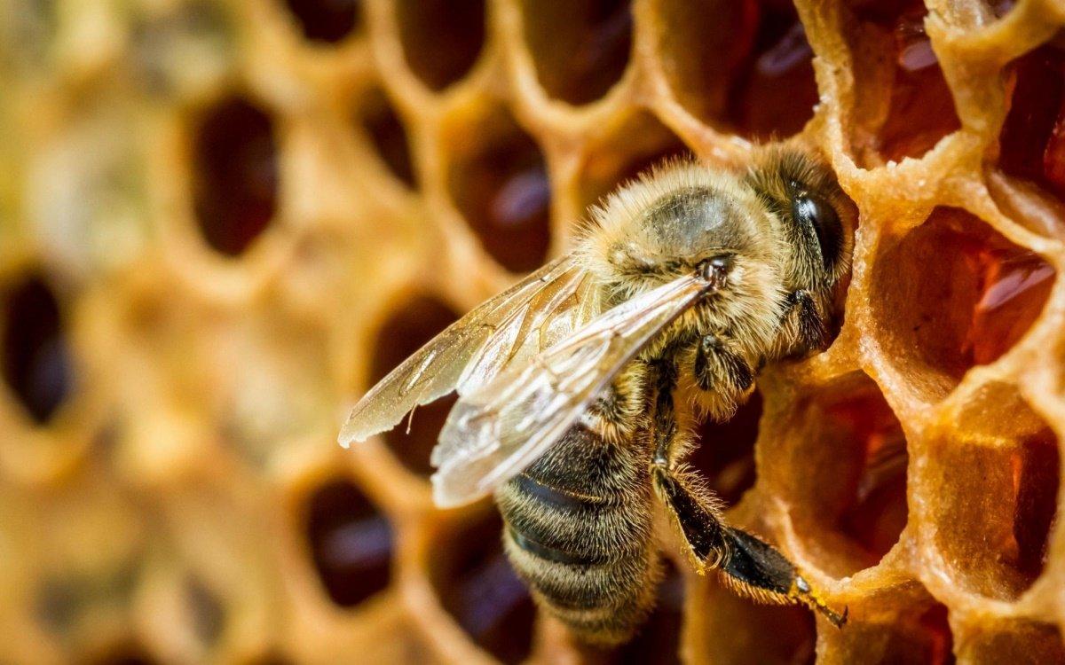 фото ЗакС политика Госдума попросит Генпрокуратуру проверить массовую гибель пчел в России