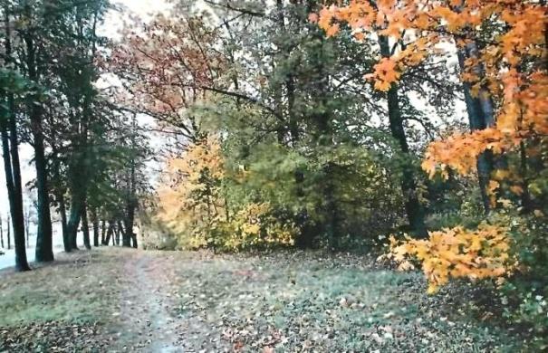 фото ЗакС политика КГИОП признал сад дачи композитора Рубинштейна региональным памятником культуры