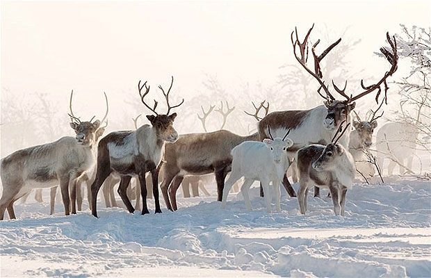 Саамы упрекнули власти Мурманской области в дискриминации из-за передачи земель охотникам