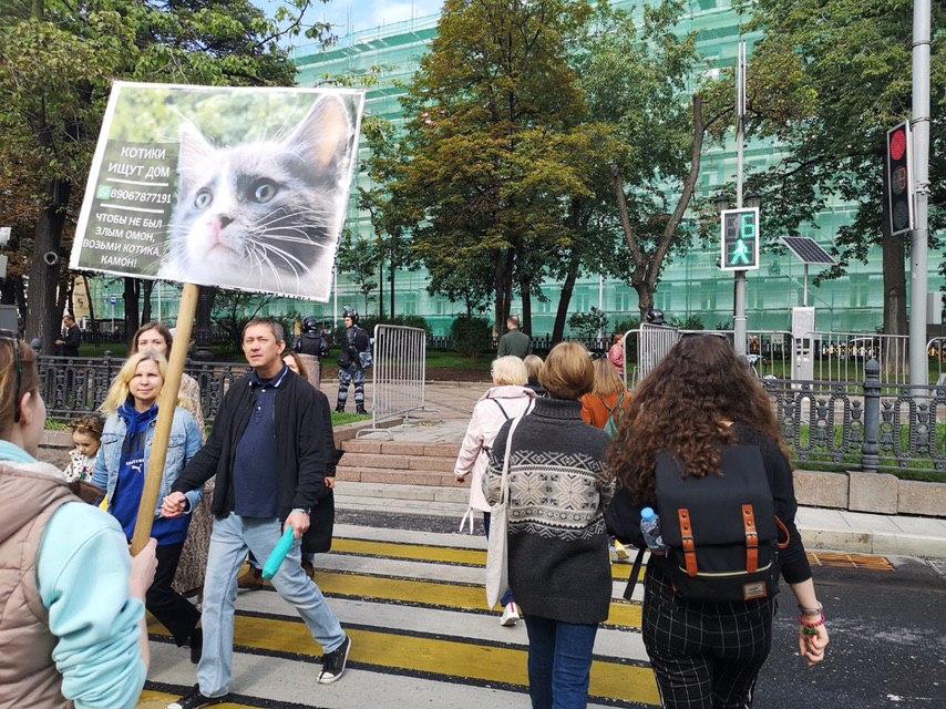 Суд оштрафовал москвичку за попытку пристроить котят 3 августа