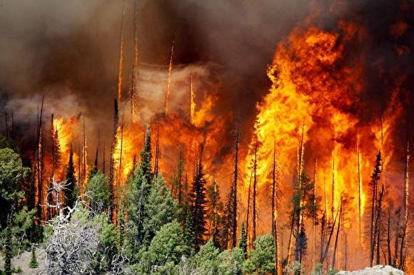 фото ЗакС политика Площадь лесных пожаров в России выросла на несколько тысяч гектаров
