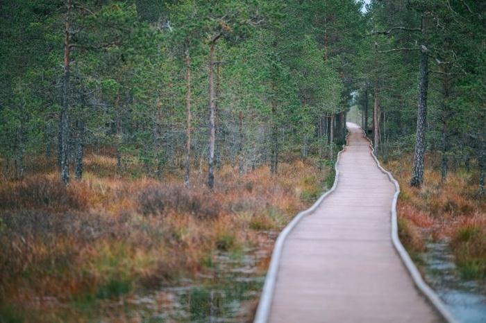 фото ЗакС политика Ленинградскую область и Финляндию свяжет благоустроенный экомаршрут