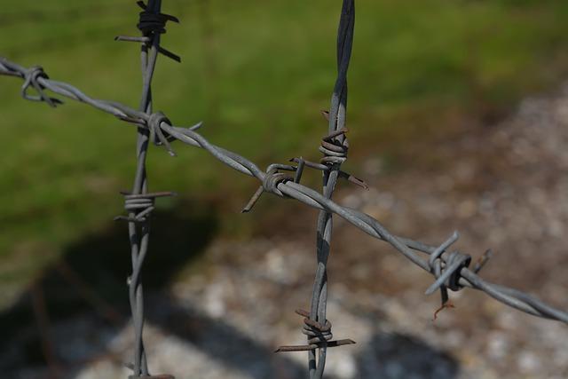 фото ЗакС политика В Псковской области завершены раскопки на территории бывшего концлагеря