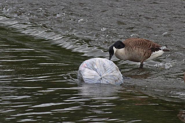 """""""Сливы яда в канализацию, мусор, гниение"""": Комиссия по запахам отчиталась о том, что учуяла в Петербурге"""