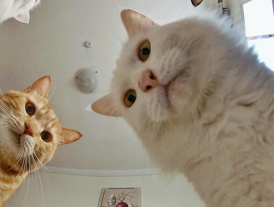 фото ЗакС политика Петербургские ученые обследовали кота, подхватившего коронавирус