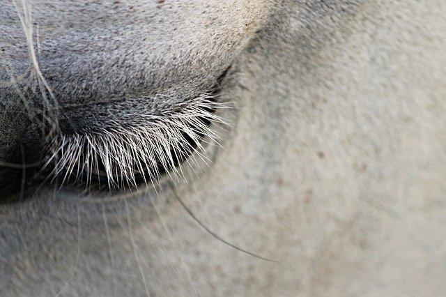 """фото ЗакС политика Мундеп """"Владимирского округа"""" предложила запретить катание на лошадях в центре Петербурга"""
