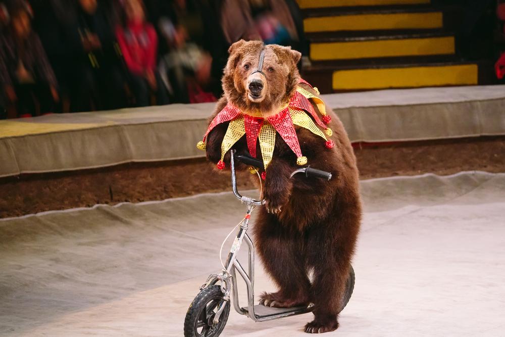 фото ЗакС политика Петербургский муниципалитет отказался закупать билеты на шоу с животными