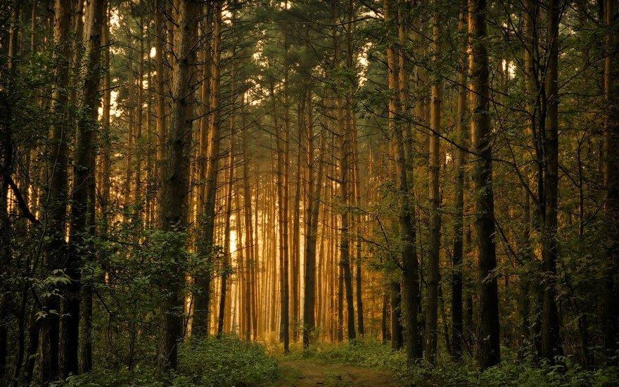 фото ЗакС политика Беглов продлил запрет на посещение лесов в Петербурге до 26 июля