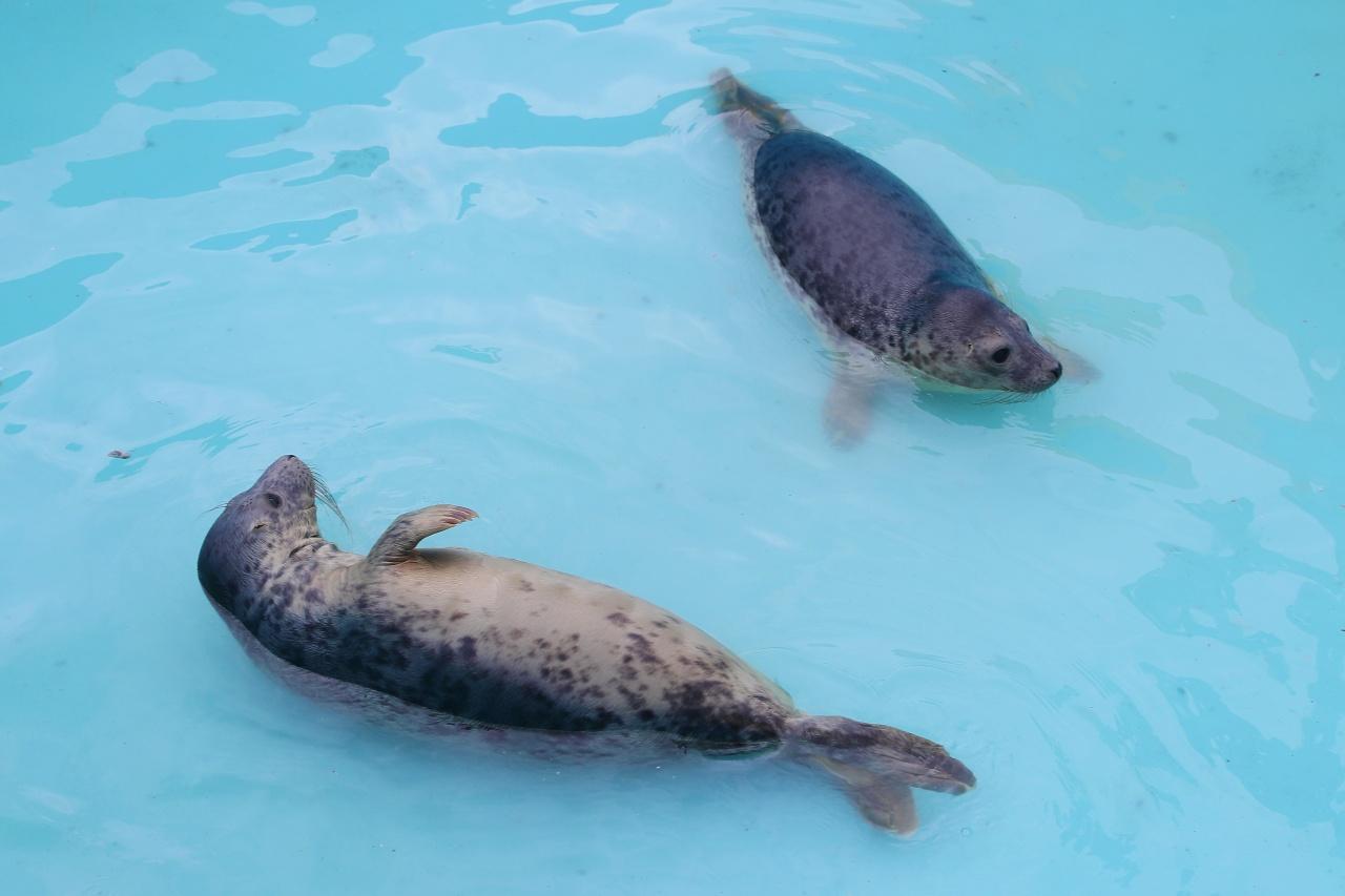 фото ЗакС политика Беглов понаблюдал за тюленями в День эколога