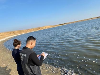 фото ЗакС политика СК проверяет сведения о массовой гибели рыбы в водохранилище в Калмыкии