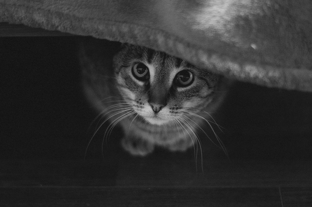 В Госдуме предложили запретить изымать домашних животных за долги