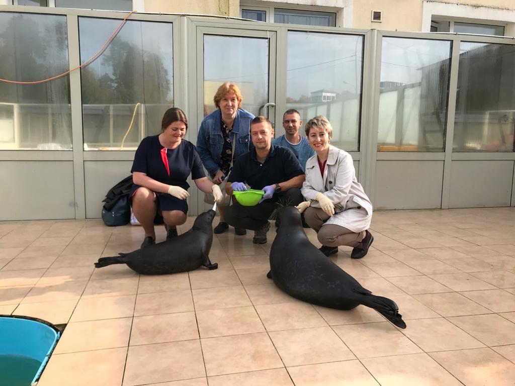 фото ЗакС политика Чиновников Ленобласти поблагодарили за помощь в спасении тюленей