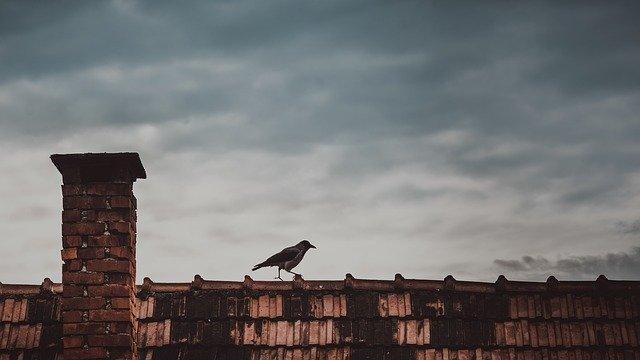 Правительство потратит 42,6 млн рублей на борьбу с воронами на крыше