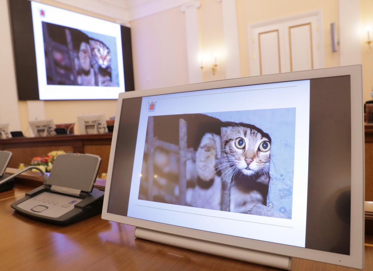 фото ЗакС политика В Петербурге появятся два государственных приюта для бездомных животных