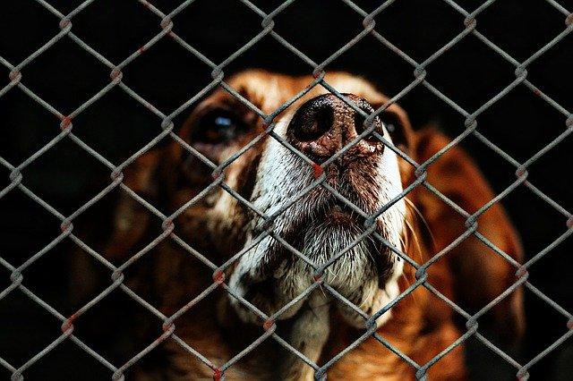 фото ЗакС политика Минприроды работает над созданием федеральных приютов для животных в России