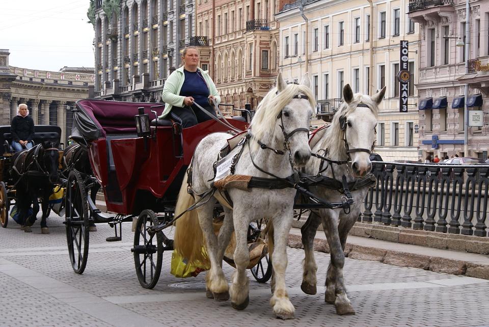 фото ЗакС политика Депутаты Владимирского округа в феврале обсудят законопроект о запрете катания на лошадях в центре Петербурга