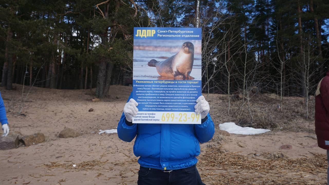 ЛДПР разместила на берегу Финского залива стенды с информацией о балтийских нерпах