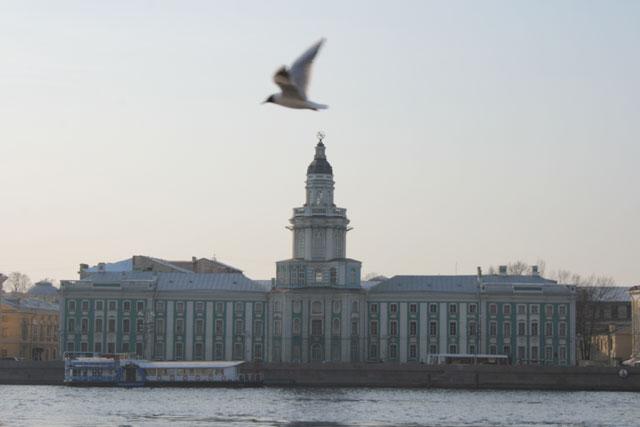 Кунсткамера санкт петербург фото